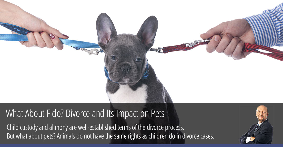 What About Fido? Divorce and Its Impact on Pets